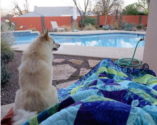 Equilateral triangle quilt, Quilt being enjoyed by DeAnn's pup